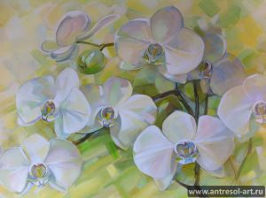 orchid_0002.jpg