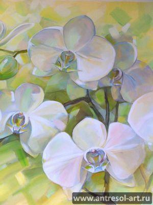 orchid_0004.jpg