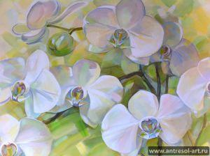 orchid_0005.jpg