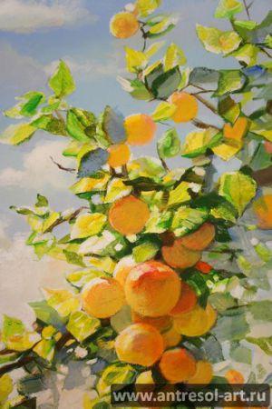 apricot_00004.jpg